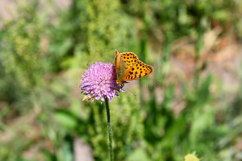 Butterfly sits on a flower in the grass. stock photo
