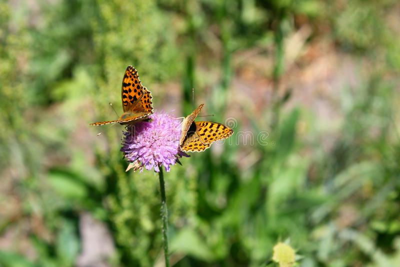 Butterfly sits on a flower in the grass. stock photos