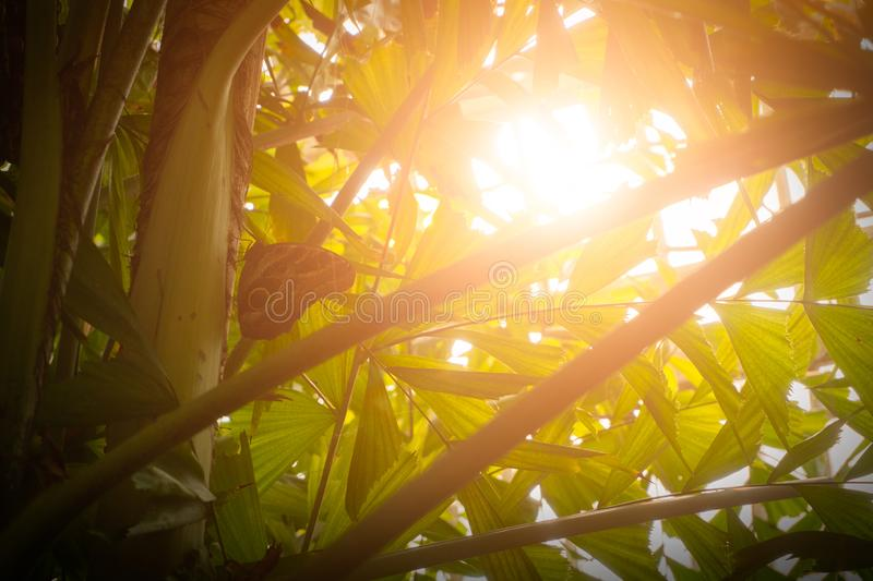 Butterfly sits on a tree in the rainforest. Sun rays stock images