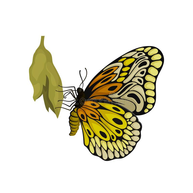 Butterfly sitting on cocoon. Flying insect with two pairs of wings with beautiful pattern. Flat vector icon. Newly born butterfly sitting on green cocoon. Flying vector illustration