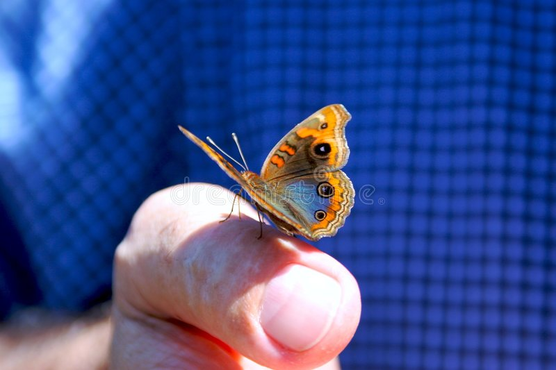 Download Butterfly Sitting On Finger Stock Photo - Image: 608232