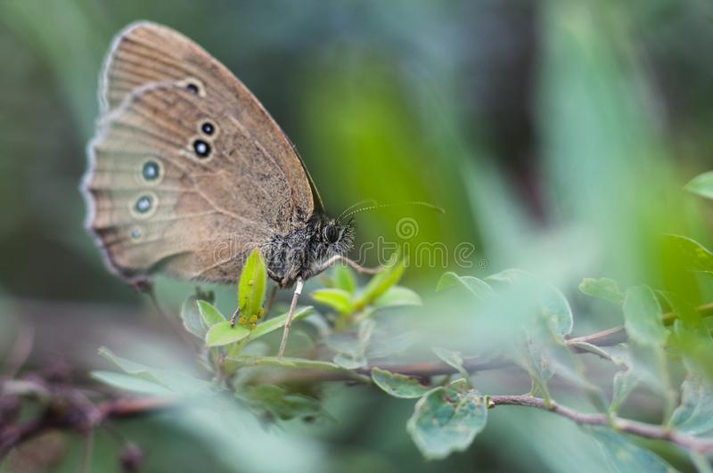 Butterfly sitting on a flower, closeup. Side view royalty free stock photography