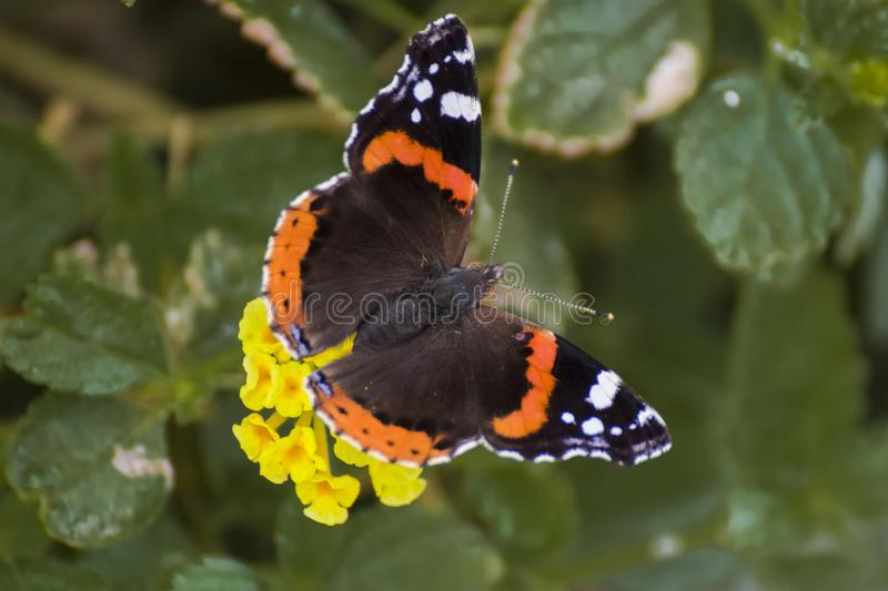 Butterfly sitting on a flower royalty free stock images