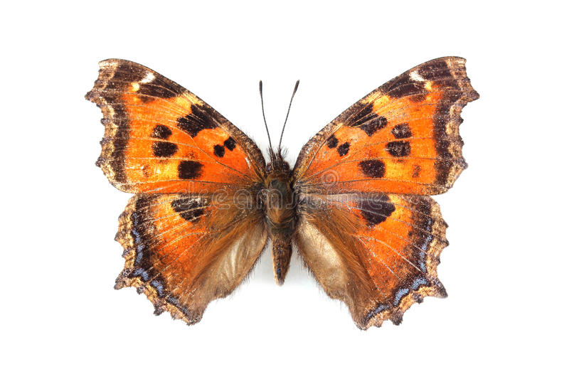 Butterfly - Small Tortoiseshell (Aglais urticae) isolated on white stock photos