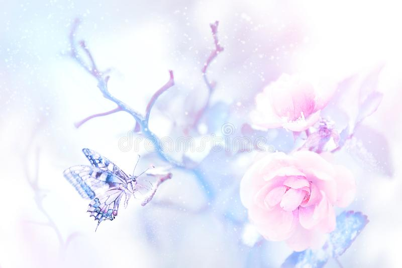 Butterfly in the snow on pink roses in a fairy garden. Artistic Christmas image. Delicate gentle tone stock illustration