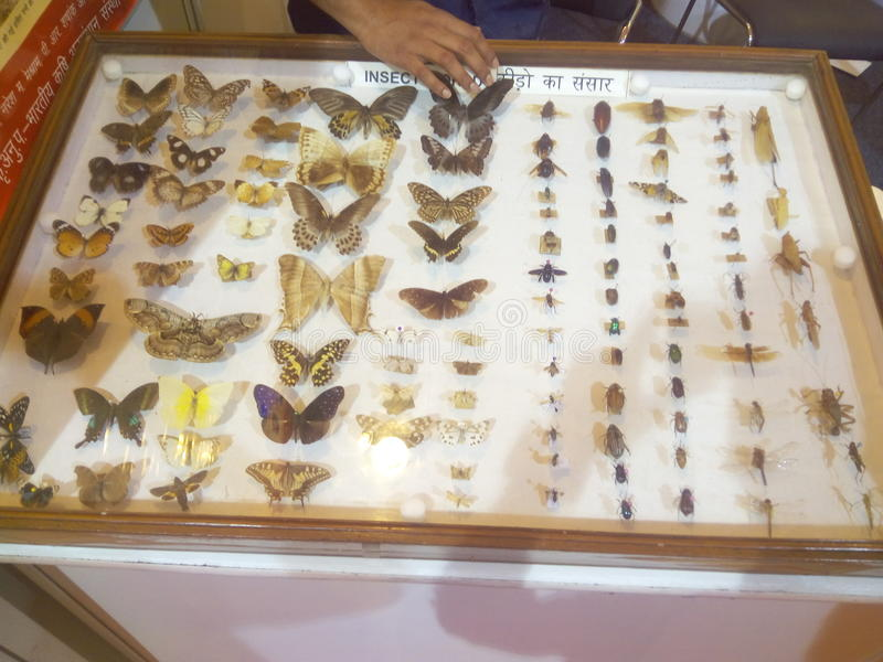 Butterfly species and inserts stock image