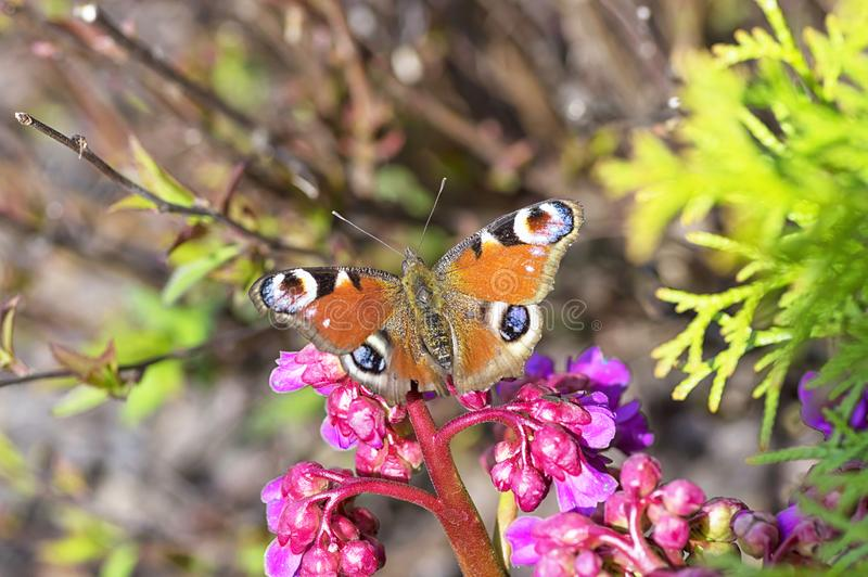 Butterfly with spreading colored wings on a close-up flower. Close-up stock photos