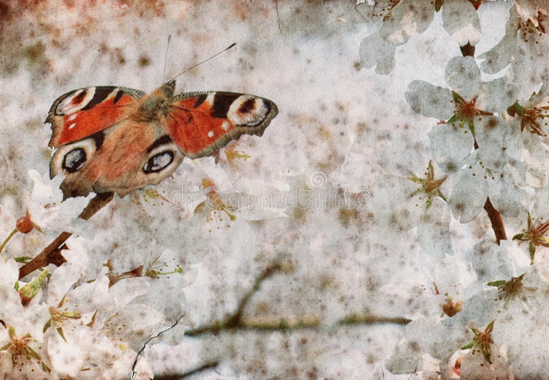Butterfly on spring cherry tree royalty free stock images