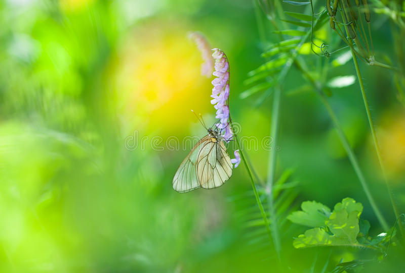 Butterfly on a spring meadow. In the sunshine royalty free stock photos