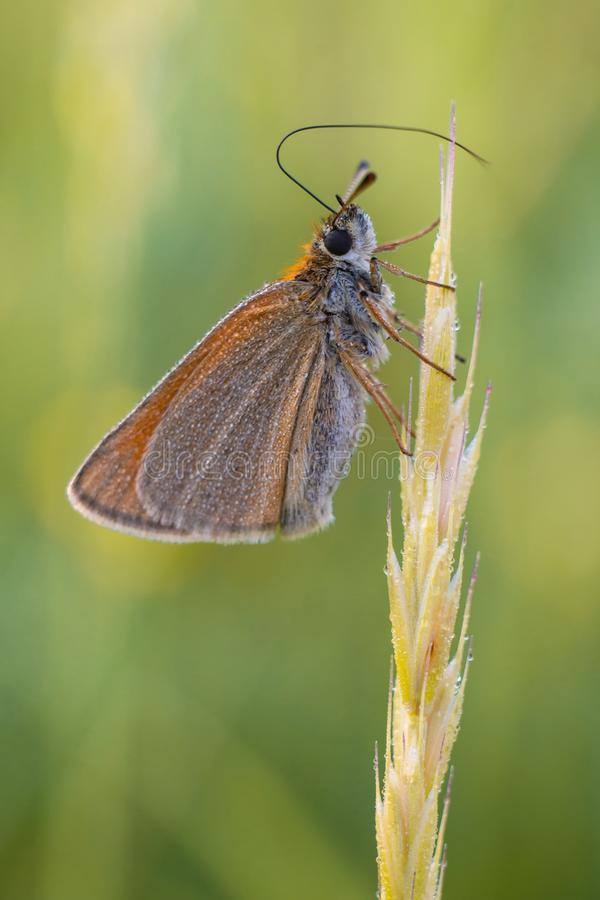 Butterfly on the summer morning meadow royalty free stock images