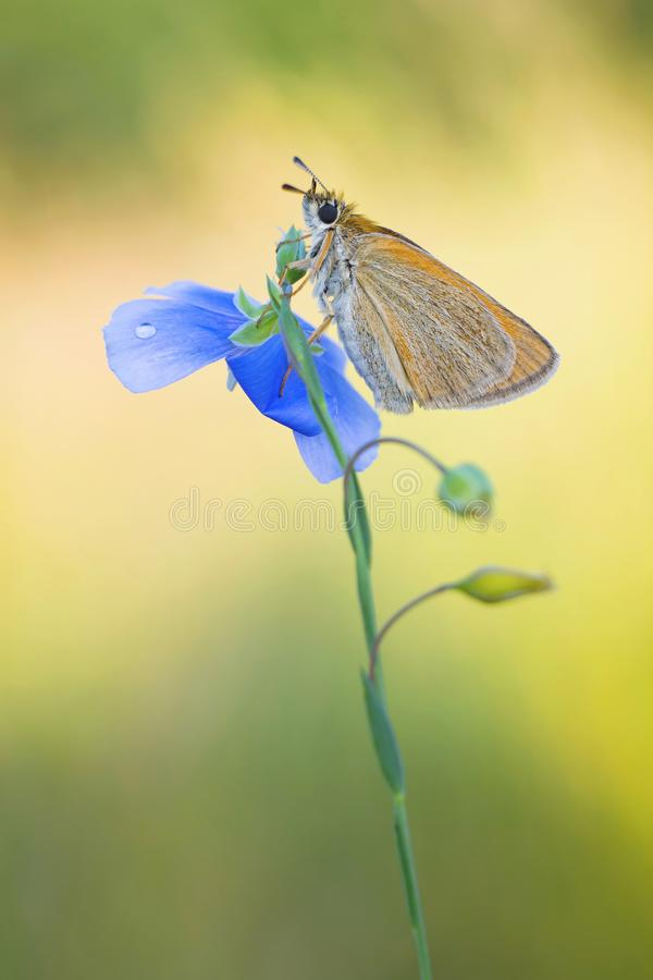 Butterfly on the summer morning meadow stock photography