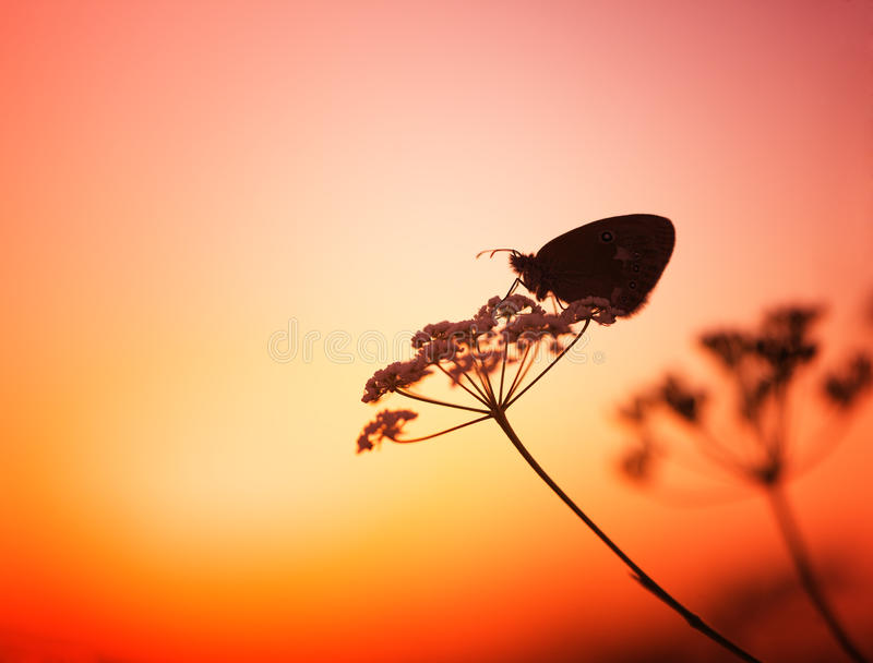 Butterfly and sunset. Butterfly on the flower,at sunset,macro photo stock image