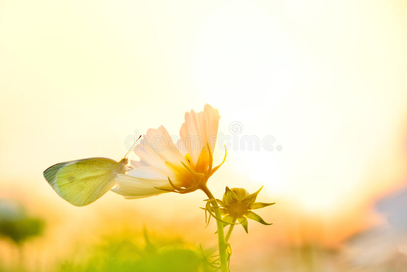 Butterfly and sunset. A butterfly rested on a flower under the sunset stock photos