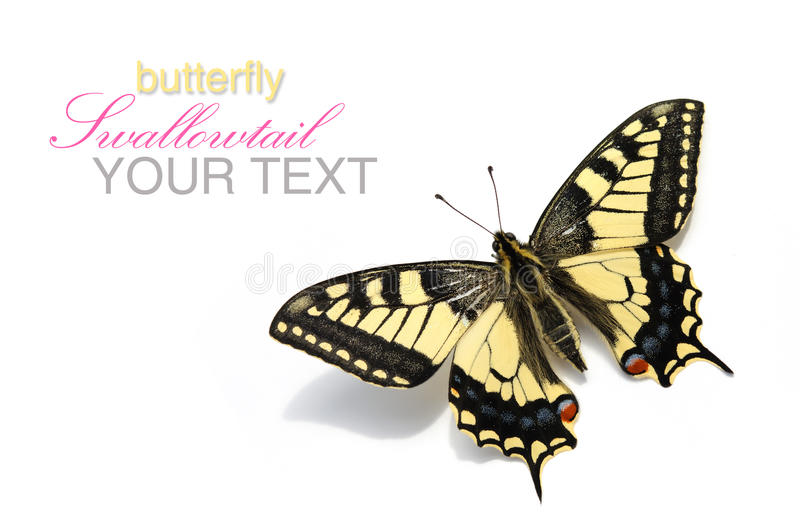 Butterfly Swallowtail (Papilio machaon). On a white background, isolated royalty free stock photos