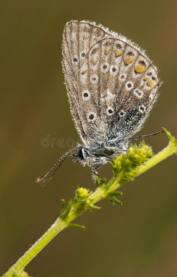 Download Butterfly With Tiny Waterdrops Stock Image - Image: 34570103