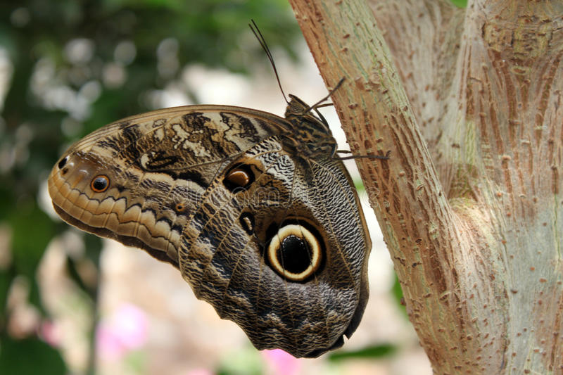 Butterfly on tree. Butterfly on a tree in the botanical garden in Yalta stock photos