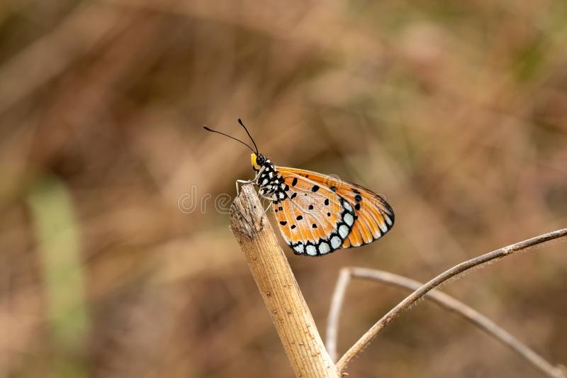 A butterfly on tree branch. Closeup butterfly on tree branch in blurry background royalty free stock images