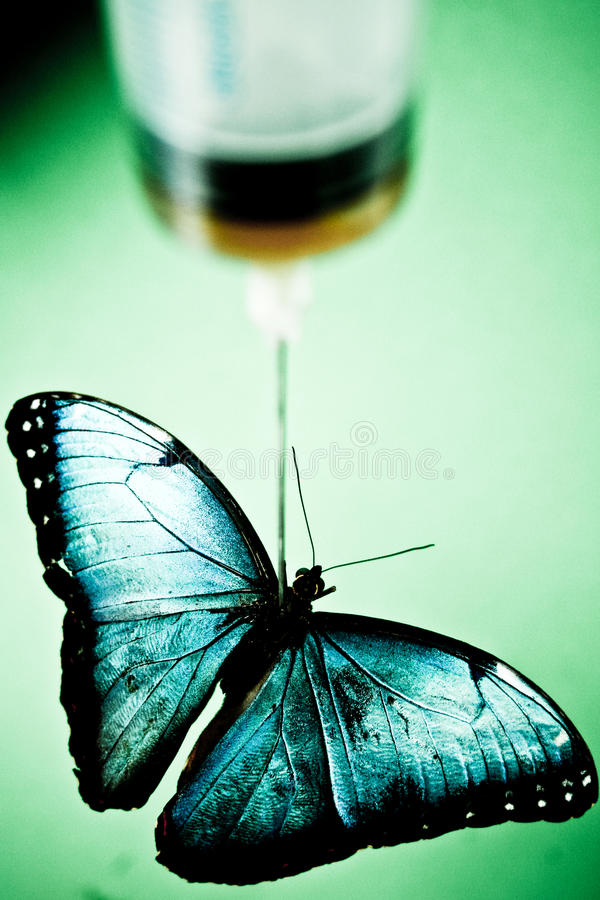 Download Butterfly under needle stock photo. Image of fall, drugs - 21539798