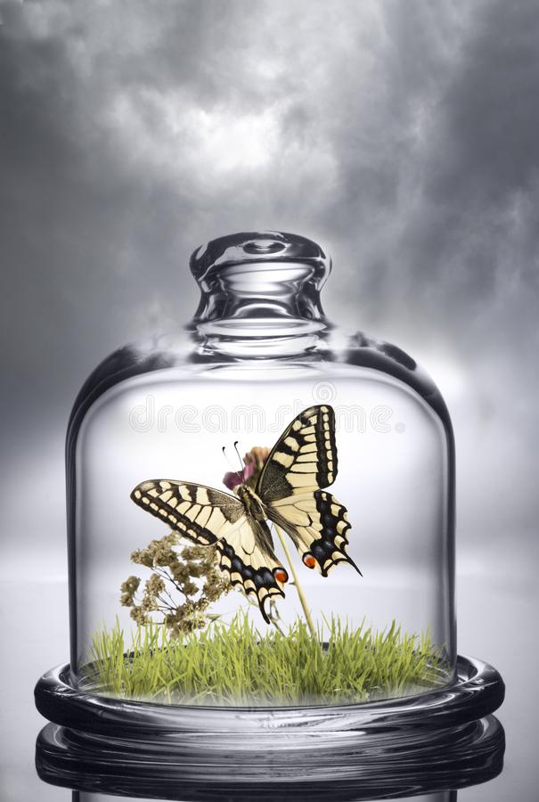 Butterfly under the protection of a glass cap. Environmental stock photos