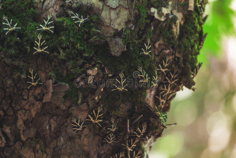 Butterfly Valley en naturreserv Rhodes ö Grekland royaltyfria foton