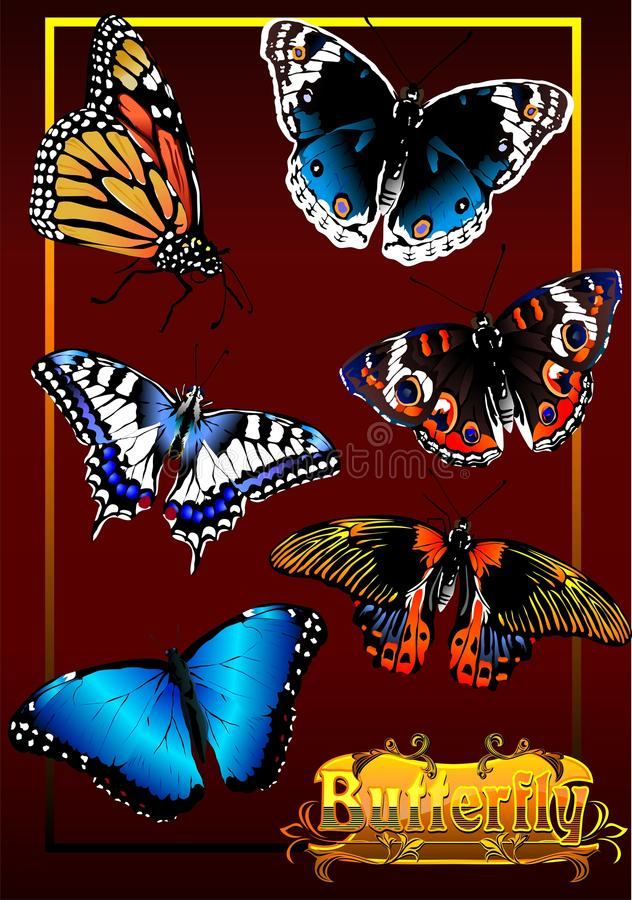 The Butterfly. (Vector). Vector collection of butterflies, various shapes and colors vector illustration