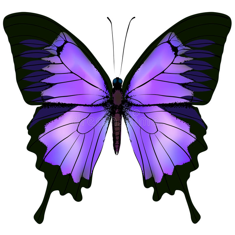 Butterfly. Vector illustration of beautiful pink and purple color royalty free illustration