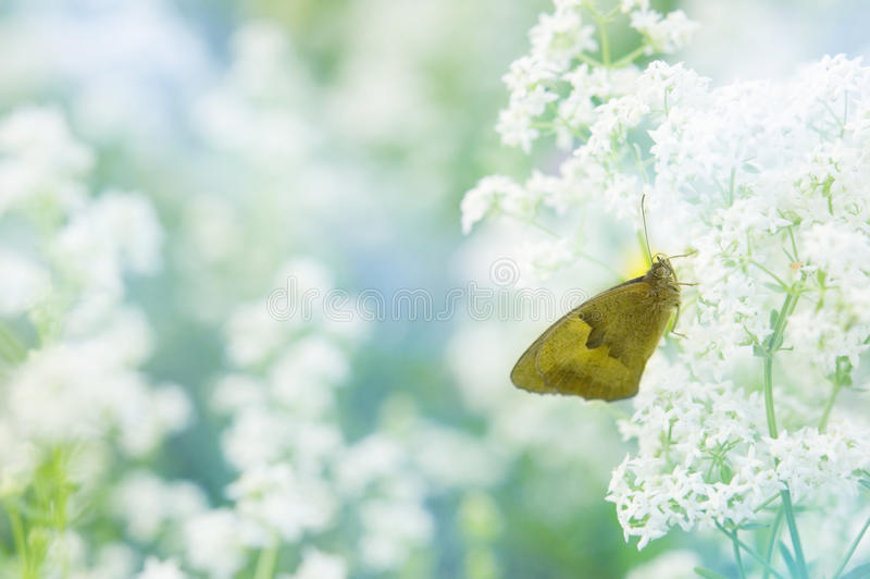 Butterfly wallpaper. Butterfly sitting on a flower pastel wallpaper royalty free stock photo