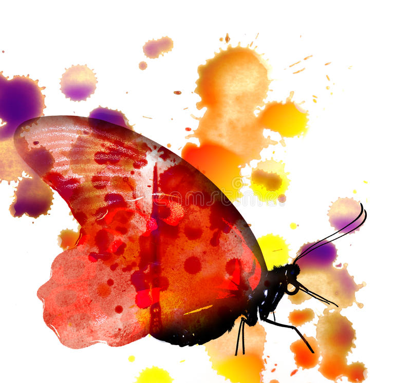 Butterfly - watercolors picture royalty free illustration