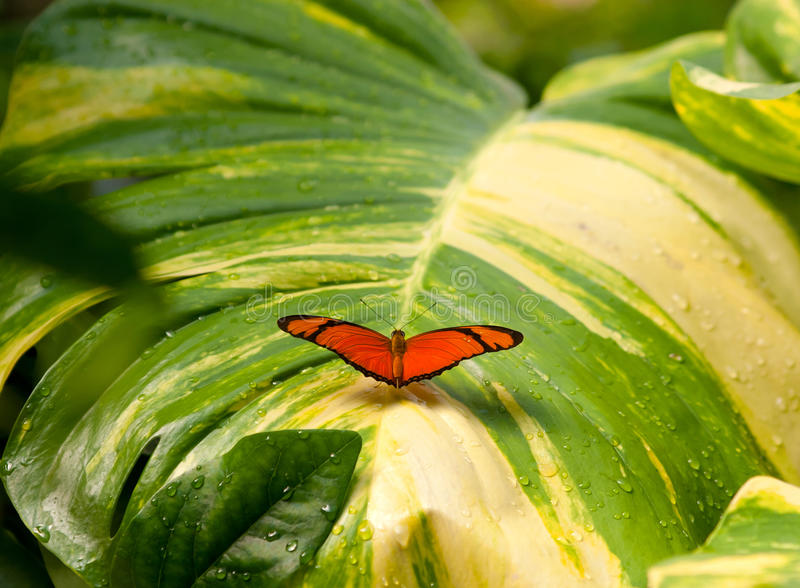 Download Butterfly on wet leaf stock photo. Image of beauty, focus - 26088106