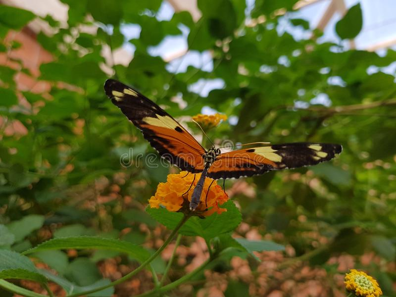 Butterfly which start to Fly stock photo