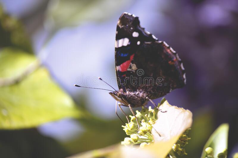 Butterfly on white flowers royalty free stock photography