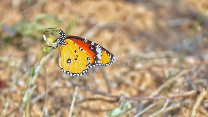 Butterfly wildlife nature beautiful outdoor stock photography