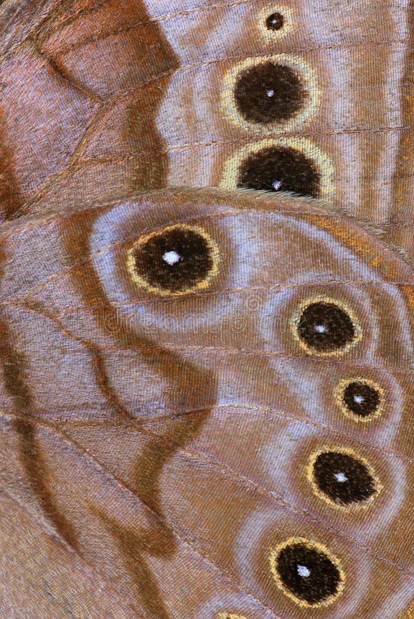 Butterfly Wing Close- up. A close- up view of the ventral side of a Northern Pearly- eye butterfly wing royalty free stock images
