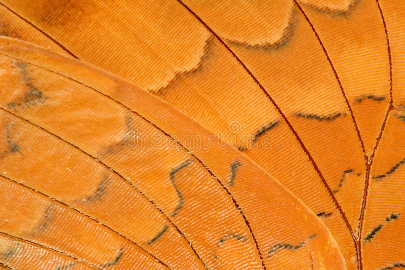 Butterfly wing extreme closeup royalty free stock image