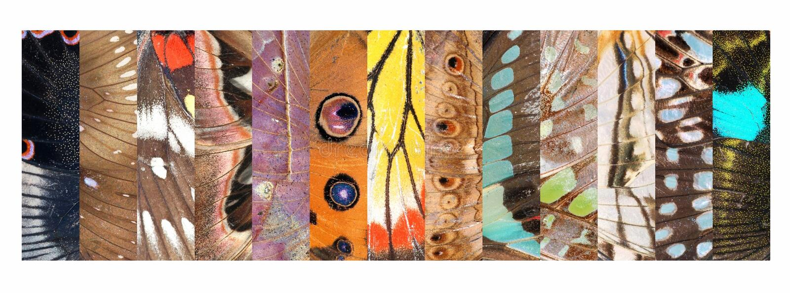 butterfly wing pattern detail collection stock photos