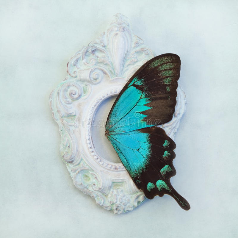 Download Butterfly Wings In A Small Frame Stock Image - Image of ornate, paper: 39500081