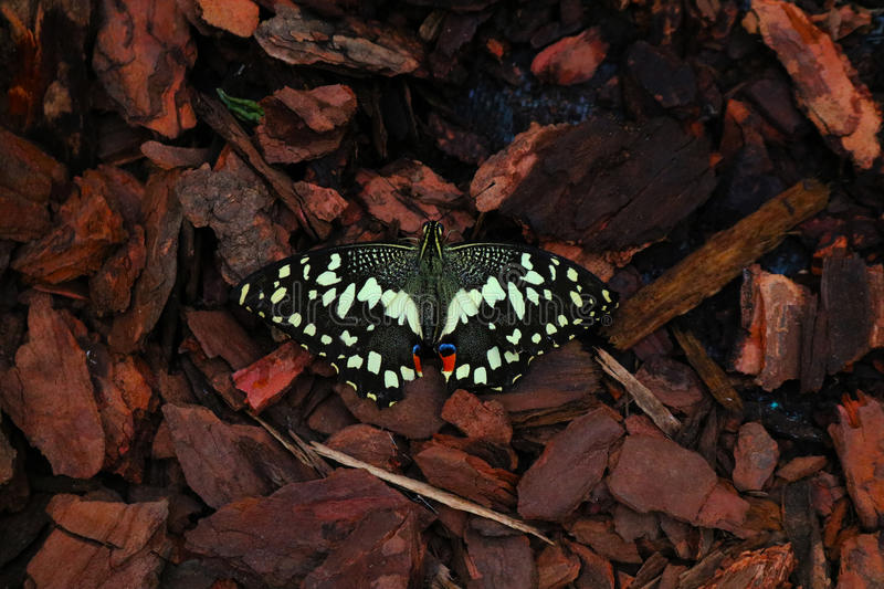 Butterfly in the woods. Exquisite butterfly captured during a natural lively exposition stock images