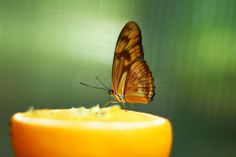 Butterfly in the woods. Exquisite butterfly captured during a natural lively exposition stock image