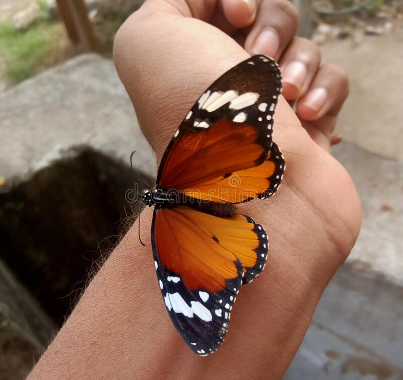 Butterfly on wrist and butterflies spreading wings stock images