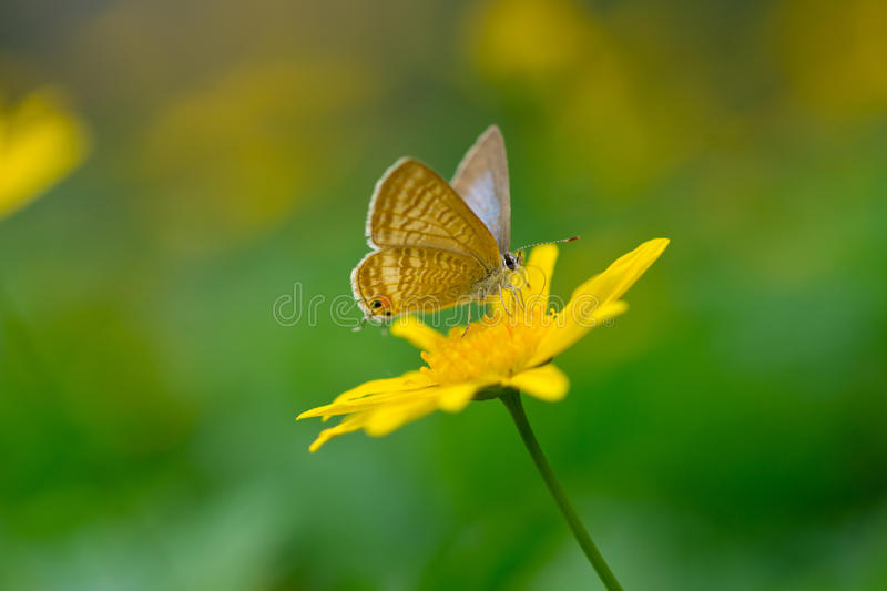 Butterfly and yellow daisy stock images