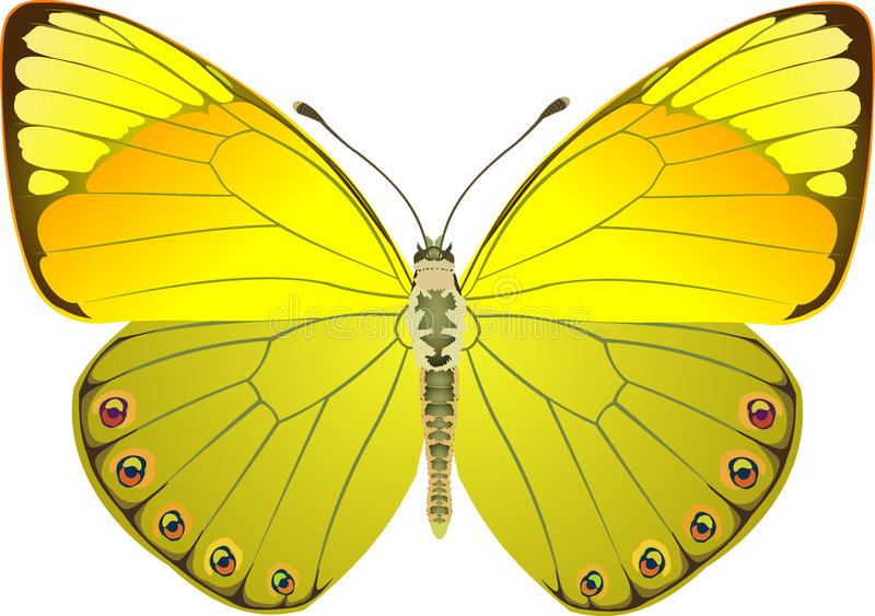 Butterfly yellow fantasy royalty free illustration