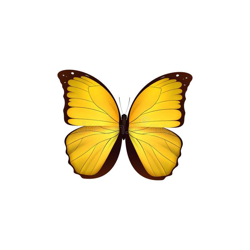 Free Butterfly Yellow Isolated On White Background. Butterflies Insects Lepidoptera Morpho Amathonte. Royalty Free Stock Image - 92521196