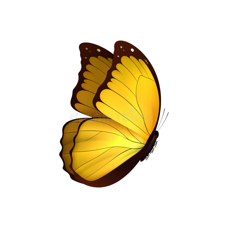 Free Butterfly Yellow Isolated On White Background. Butterflies Insects Lepidoptera Morpho Amathonte. Royalty Free Stock Photos - 92966398