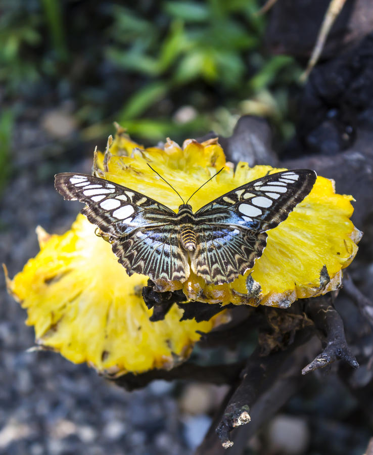 Download Butterfly On Yellow Pineapple Stock Image - Image of wing, park: 39508127