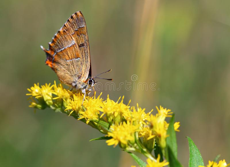 Butterfly on yellow plant stock photography