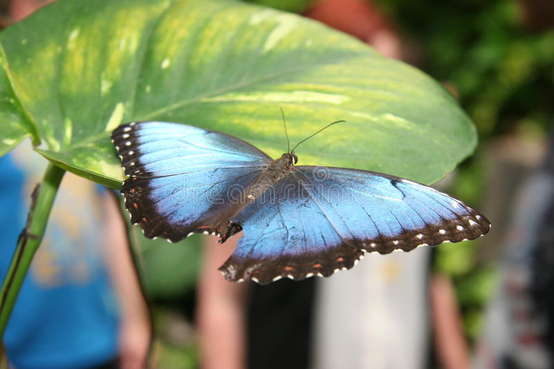Butterfly in a zoo royalty free stock photo