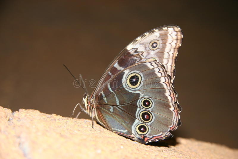 Butterfly in a zoo royalty free stock photos