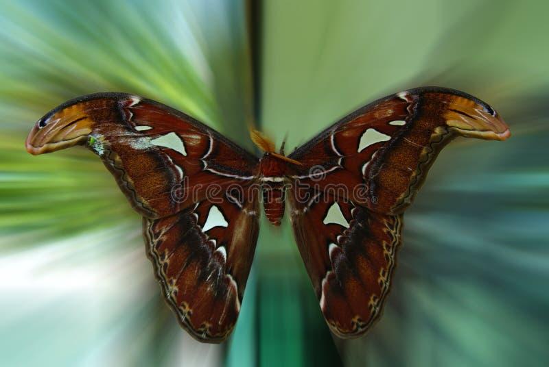 Butterfly01 fotografia de stock