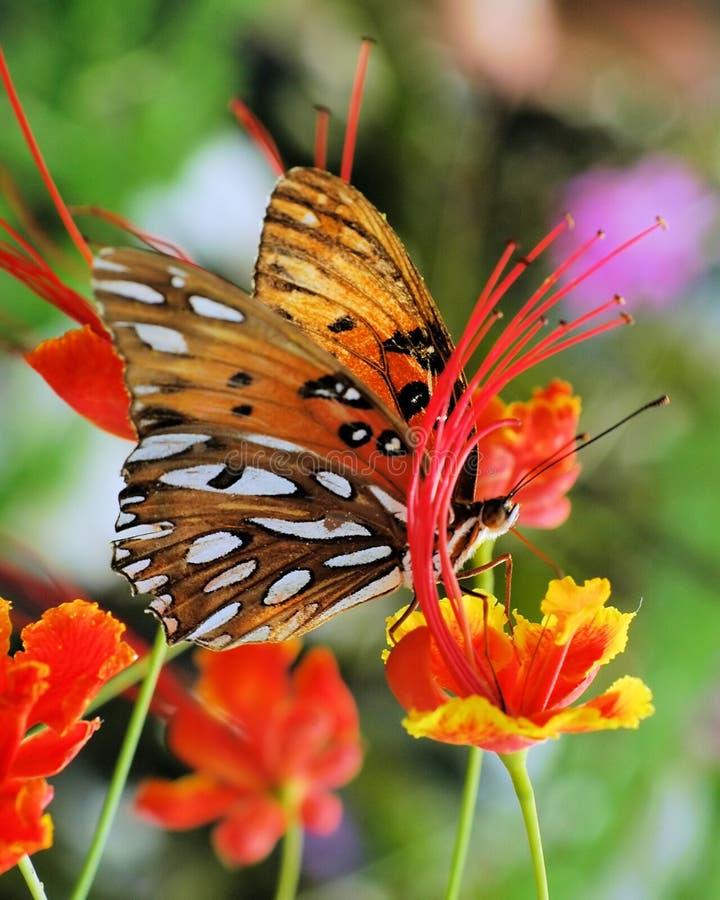 butterfly03 royaltyfria bilder