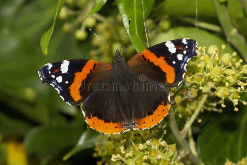 Butterfly54 fotos de stock royalty free